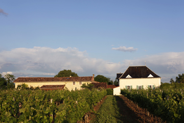french property for sale - view through the vineyard